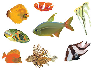 eight color fish collection on white