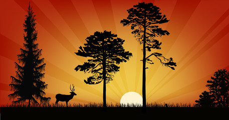 single deer and three trees at sunset