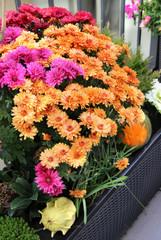 Mix of  beautiful fall terrace flowers