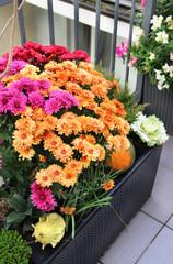 Mix of  beautiful flowers in the fall terrace garden
