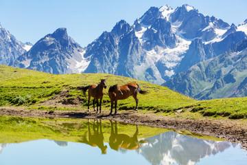 fototapeta konie w górach nad jeziorem