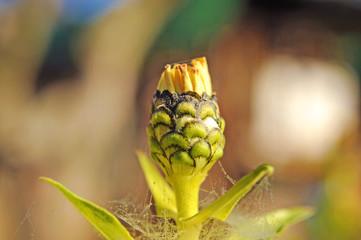 Natura - fiore