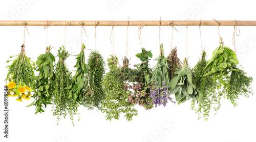 świeże zioła wiszące na białym tle. bazylia, rozmaryn, tymianek, m