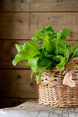 Sorrel leaves in a basket