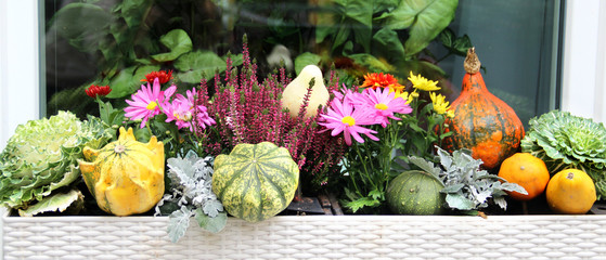 Mix of beautiful vivid terrace fall flowers and pumpkin