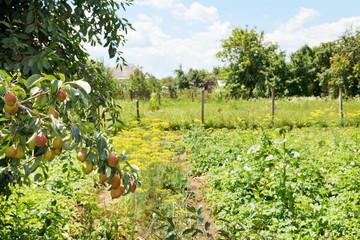 view of rural garden on backyard