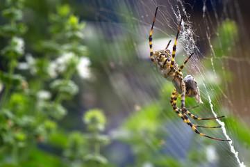 ragno su ragnatela
