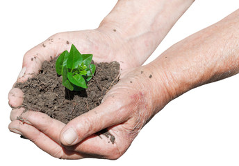 farmer hands with soil and green sprout