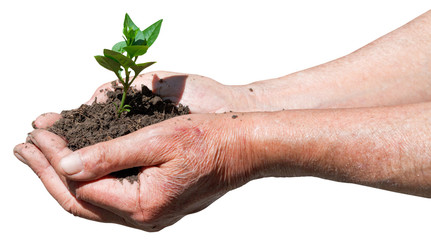 farmer handful with soil and green sprout