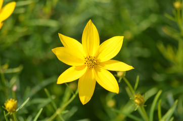 Yellow garden flower, Philadelphia airport