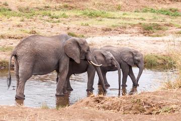 Elephants in the Tarangire River