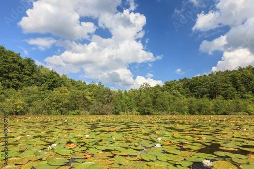 canvas print picture Seenlandschaft mit Seerosen vor Wald und blauem Himmel