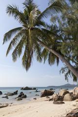 Felsen und Palmen am Strand der Insel Ko Phangan