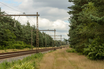 Dutch railroad through forest