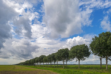 Clouds over a row of trees in the countryside