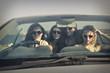 four girls driving a car