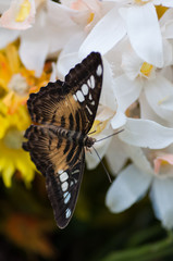 Exotic butterfly in a plastic flower