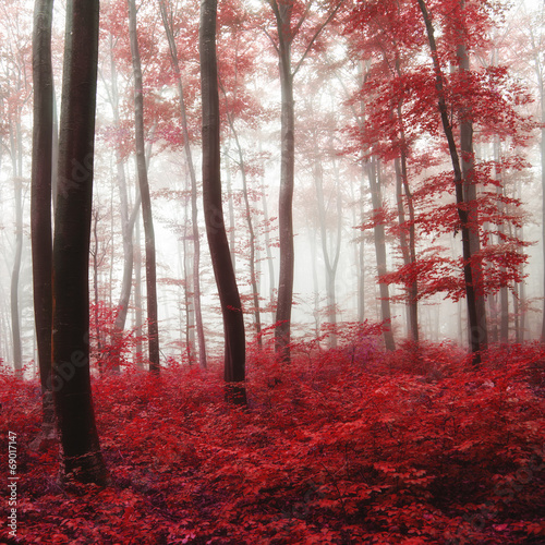 Fototapeta Glow light autumn forest