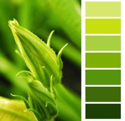 courgette green color chart palette swatches
