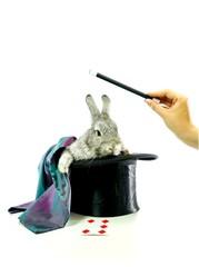 Kaninchen aus dem Hut zaubern, freigestellt
