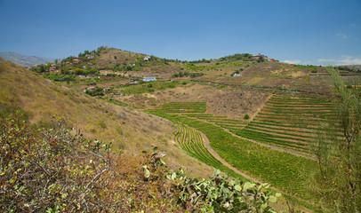 Vineyards around Bandama