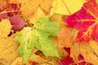 buntes Herbstlaub auf dem Boden
