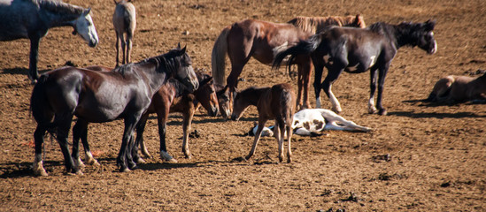 Wild Horses Being Held in Captivity