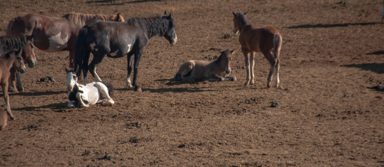 Newborn Foal in Bureau of Land Management Area