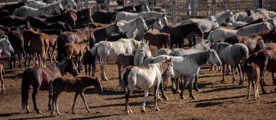 Captive Wild Horses in Rock Spring, Wyoming