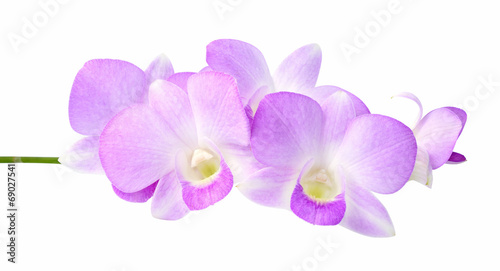 In de dag Orchidee Violet orchid isolated on white background