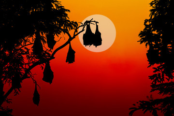 silhouetted fruit bat on tree at sunset