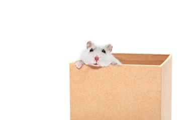 Hamster In Box