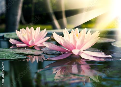 Lotus - 69029181