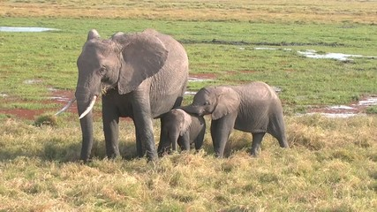 Two Baby Elephants and Mother