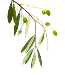 forming olives