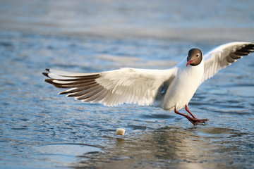 white seagull on the ice