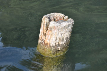 Wooden pole in the water