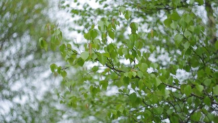 Bokeh background and tree foliage.