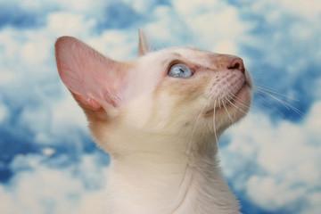 Niedliche kleine Katze vor Wolkenhimmel