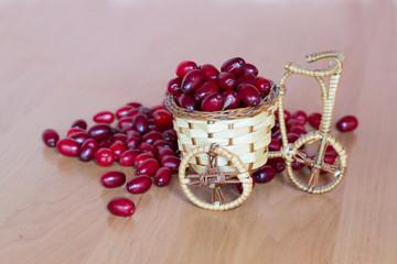 basket with dogwood
