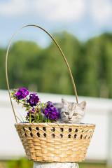 little fluffy kitten sitting in a basket