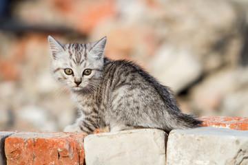 Kitten climbs bricks
