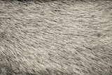 Fototapety texture from fur of beige color