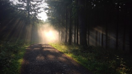 Waldweg im Nebel