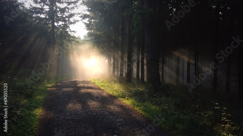 canvas print picture Waldweg im Nebel