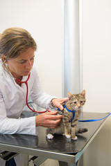Veterinarian examining little cat