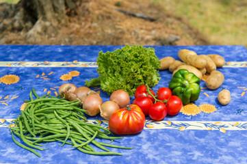 Vegetables in French garden