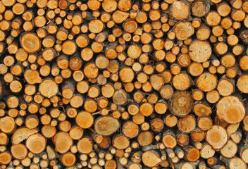 many tree trunks in the Woodshed of lumberjack who is getting re