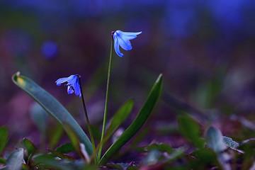 bluebell flower snowdrop