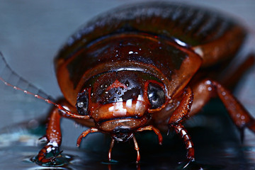 water beetle macro
